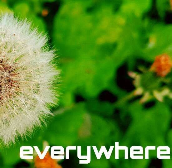 Music Review: everywhere – Demo Tracks
