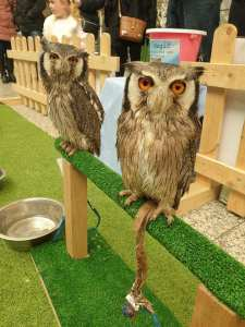 Owls from Owl Magic