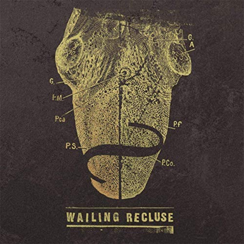 Single Review: Wailing Recluse – Fallen Angel